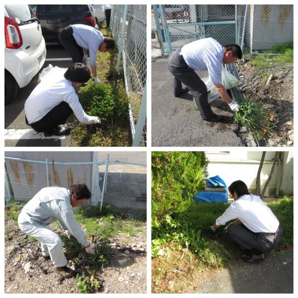 本社敷地の草取りを行いました。